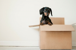 25 tips for a smoother move